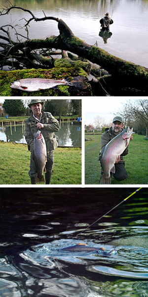 Big fish Gallery fly troutfishing brown uk cotswolds gloucestershire